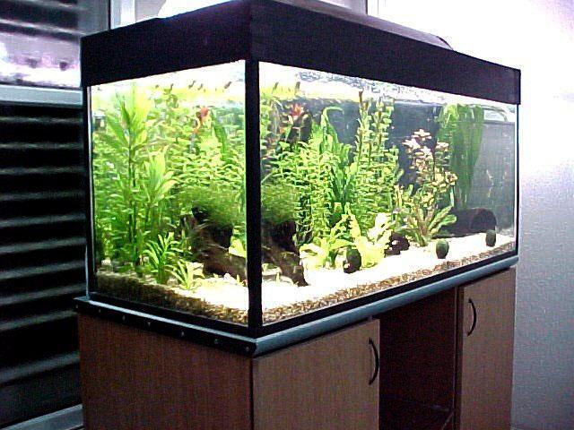 Лампы для освещения аквариума